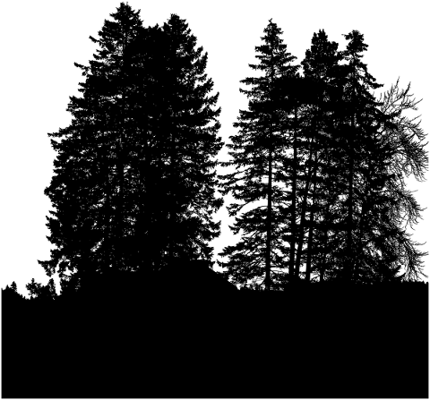 forest-trees-silhouette-branches-5161169