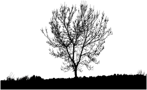 nature-tree-silhouette-landscape-4707727