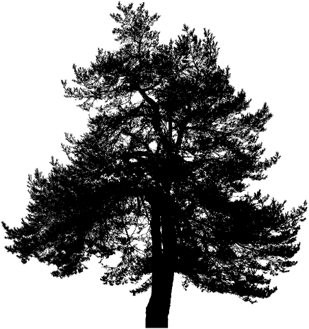 tree-silhouette-nature-trees-plant-4179484