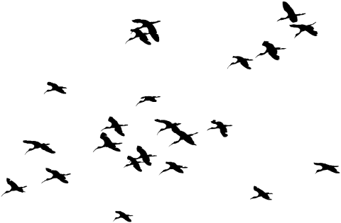 birds-silhouette-animals-flying-5161166