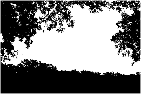 forest-trees-silhouette-branches-5188709