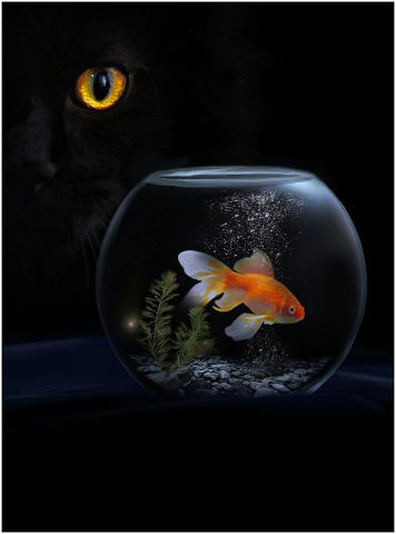 animal-cat-goldfish-fish-pet-4693954