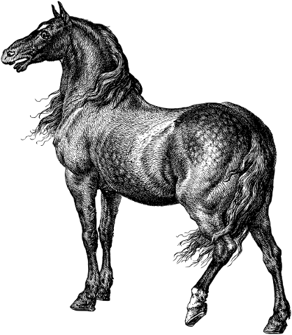 horse-animal-line-art-equine-5553124
