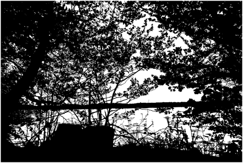 forest-trees-silhouette-lake-5142641